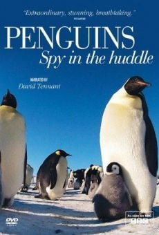 Película: Penguins – Spy in the Huddle