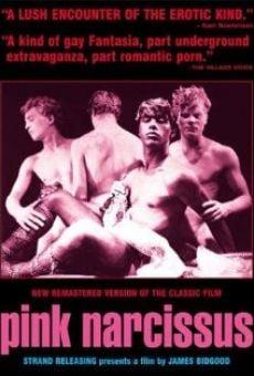 Pink Narcissus gratis