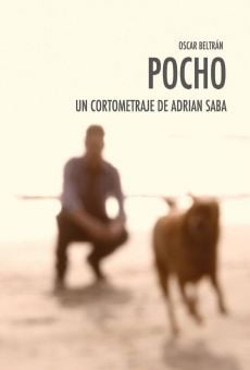 Watch Pocho online stream