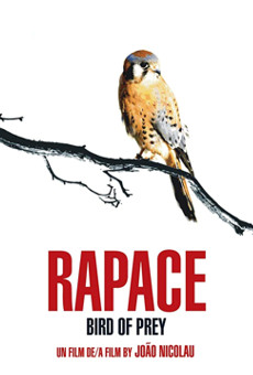 Rapace online free