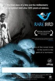 Rare Bird en ligne gratuit