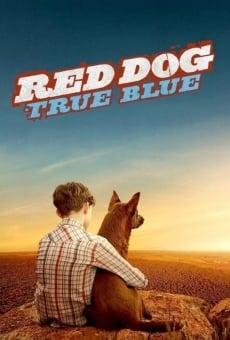 Blue, mon chien d'Australie en ligne gratuit