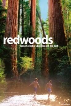 Redwoods online