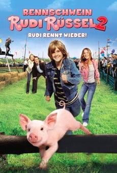Ver película Rudy, el cerdito de carreras