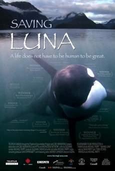 Saving Luna online