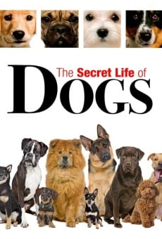 Secret Life of Dogs online kostenlos