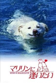 Ver película Shiro and Marilyn