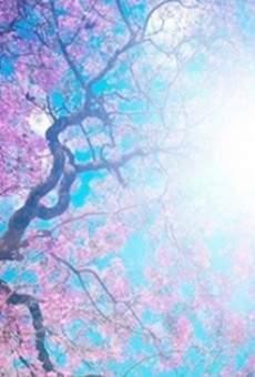 Ver película Sol de primavera