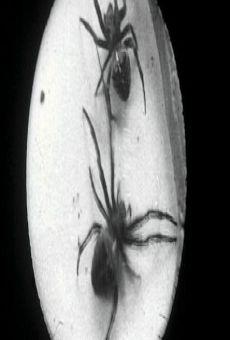 Ver película Spiders on a Web