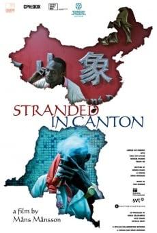 Ver película Stranded in Canton
