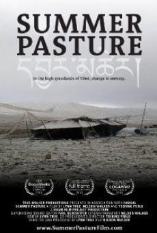 Summer Pasture online