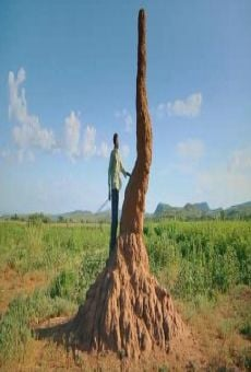 Die Geheime Welt der Termiten
