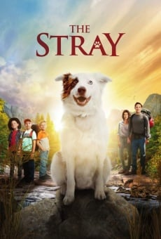 The Stray on-line gratuito