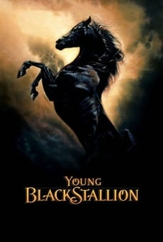 Young Black Stallion online