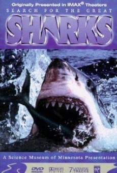 Search for the Great Sharks online