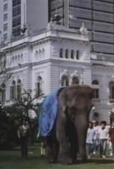 Ver película Un elefante en banda