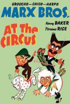 Ver película Una tarde en el circo