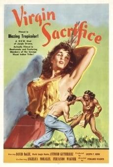 Ver película Sacrificio en la jungla