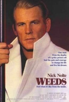 Ver película Weeds