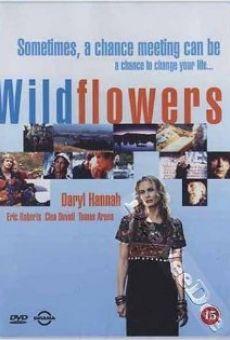Wildflowers on-line gratuito