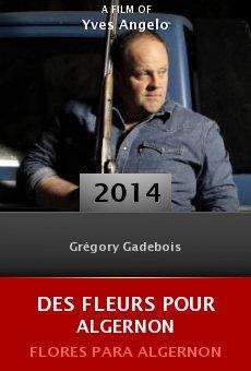 Ver película Des fleurs pour algernon