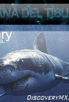 Aventuras en la Semana del Tiburón online gratis