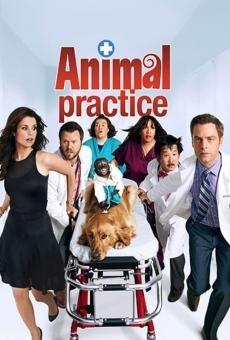Animal Practice online gratis