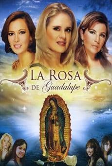 La rosa de Guadalupe online gratis