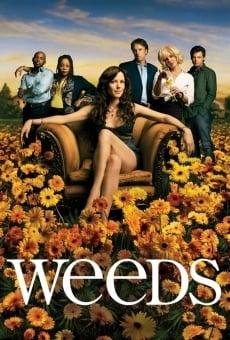Weeds online gratis